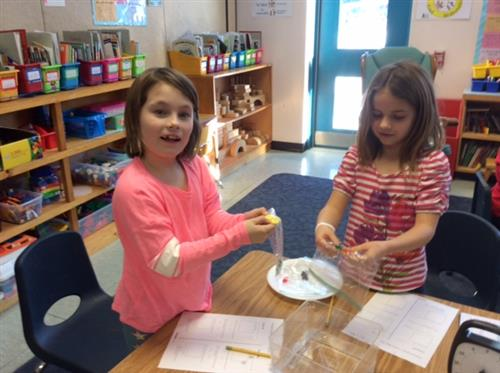 Science- Testing candy for meltability