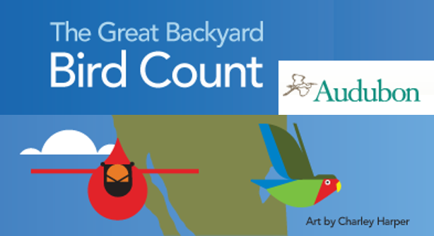 Great Backyard Bird Count Feb 16-19