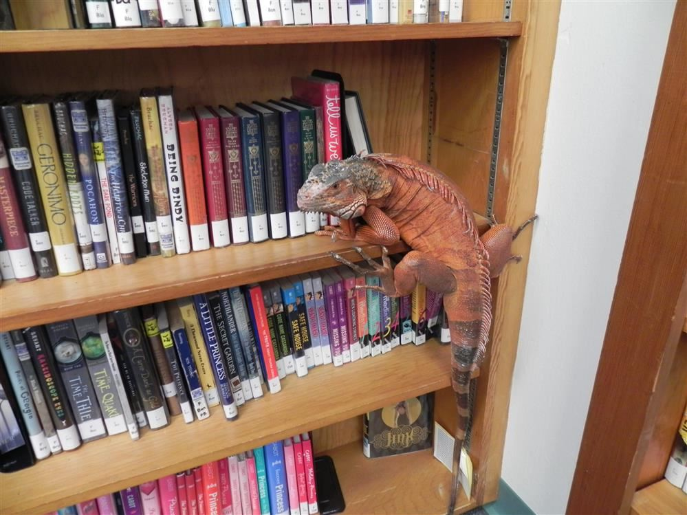 Chuck visits the library